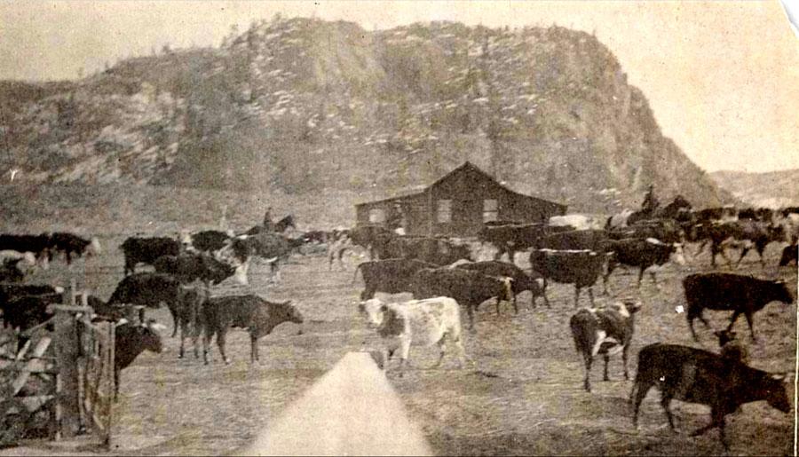 The Historic Haynes Ranch